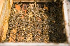 Muchas abejas en una colmena abierta Fotografía de archivo