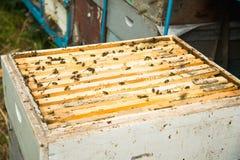 Muchas abejas en una colmena abierta Fotos de archivo libres de regalías