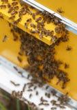 Muchas abejas pululan en la entrada a la colmena Foto de archivo libre de regalías