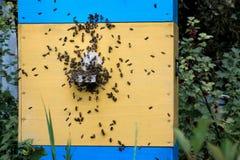 Muchas abejas que se sientan en la pared de la colmena y de los bas azules del amarillo del vintage Foto de archivo libre de regalías