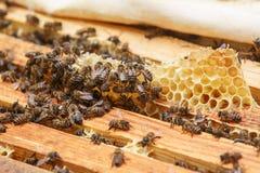 Muchas abejas se arrastran en los marcos con la miel en la colmena Foto de archivo