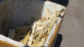 Muchas abejas vuelan alrededor de la caja inútil después de exprimir el zumo de caña del azúcar 4K metrajes