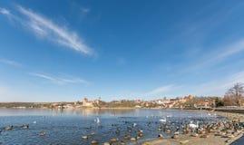 Muchas aves acuáticas en la orilla del lago dulce hermoso en la tierra de Mansfelder en Alemania fotos de archivo