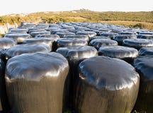 Muchas balas de heno envueltas Imagen de archivo