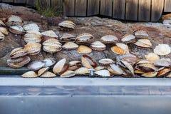 Muchas cáscaras de concha de peregrino que mienten cerca de fregadero Fotos de archivo libres de regalías
