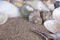 Muchas cáscaras del molusco con la arena de la playa en blanco Fotografía de archivo