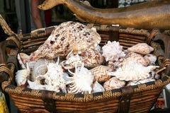 Muchas cáscaras hermosas del mar en una cesta de mimbre Foto de archivo libre de regalías