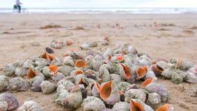 Muchas c?scaras hermosas de rapan en la arena en las ondas del mar de la costa del Mar Negro almacen de video