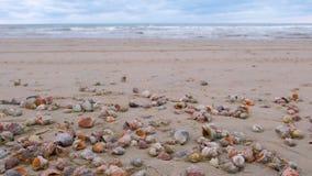 Muchas c?scaras hermosas de rapan en la arena en las ondas del mar de la costa del Mar Negro metrajes