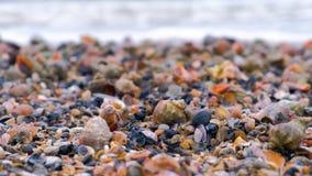 Muchas c?scaras hermosas de rapan en la arena en la opini?n del primer de la costa del Mar Negro con las ondas del mar metrajes