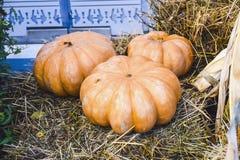 Muchas calabazas y parte posterior brillante de los productos del otoño de la decoración del heno Imagen de archivo