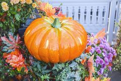 Muchas calabazas y parte posterior brillante de los productos del otoño de la decoración del heno Imágenes de archivo libres de regalías