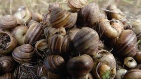 Muchas conchas marinas grandes almacen de metraje de vídeo
