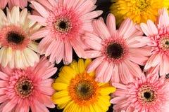 Muchas de flotación tropical fresca de la flor Imagen de archivo libre de regalías