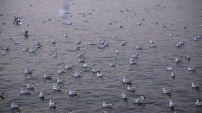Muchas de gaviotas en el puerto tarde almacen de metraje de vídeo