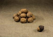 Muchas de nueces en el vector Fotos de archivo libres de regalías