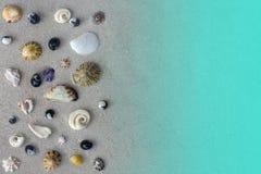 Muchas diversas conchas marinas del mar de Tasman en fondo o textura gris de la arena Fotos de archivo libres de regalías