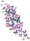 Muchas diversas mariposas en el fondo blanco Imagen de archivo