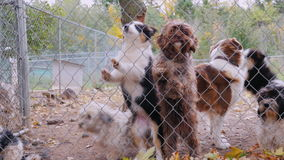 Muchas diversas razas de perros detrás del refugio para animales de la cerca o de la perrera almacen de metraje de vídeo