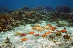 Muchas estrellas de mar subacuáticas en un arrecife de coral Fotografía de archivo
