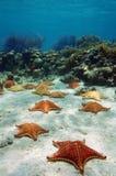 Muchas estrellas de mar subacuáticas con un arrecife de coral Imagen de archivo