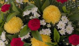 Muchas flores coloridas Fotografía de archivo