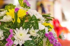 Muchas flores coloridas Imagen de archivo
