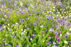 Muchas flores en colores variados del cierre foto de archivo libre de regalías