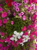 Muchas flores en el parque, rojo, blanco, rosado imagenes de archivo
