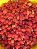 Muchas fresas salvajes Fotografía de archivo libre de regalías