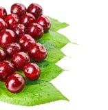 Muchas frutas mojadas rojas de la cereza Imagen de archivo