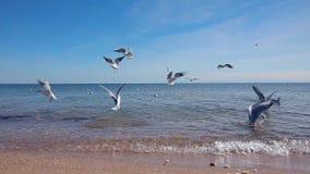 Muchas gaviotas vuelan sobre la playa, una multitud de gaviotas vuelan en la playa almacen de metraje de vídeo