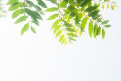 Muchas hojas Fotografía de archivo libre de regalías