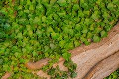 Muchas hojas del verde con la rama seca en árbol seco Imagen de archivo