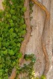 Muchas hojas del verde en árbol Imagenes de archivo
