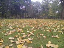 Muchas hojas secadas foto de archivo
