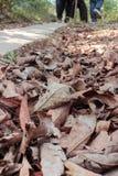 Muchas hojas secas en la calzada en el otoño Fotografía de archivo