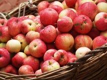 Muchas manzanas fotografía de archivo