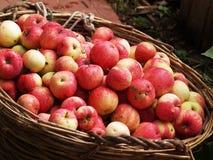 Muchas manzanas imagen de archivo libre de regalías