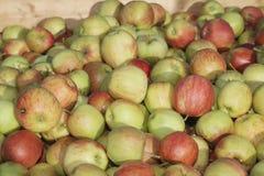 Muchas manzanas en cajas de madera foto de archivo