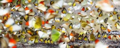 Muchas mariposas Fotos de archivo