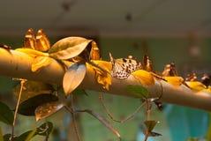 Muchas mariposas Foto de archivo
