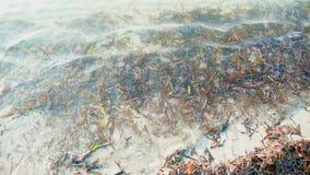 Muchas medusas fotografía de archivo