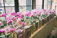 Muchas orquídeas envueltas Fotografía de archivo libre de regalías
