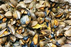 Muchas ostras cocidas Fotografía de archivo