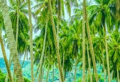 Muchas palmeras en el fondo de montañas imagen de archivo