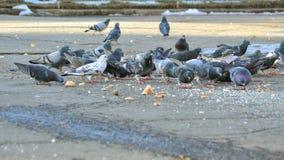 Muchas palomas coloridas que comen el pan en un parque Imagen de archivo