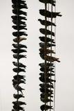 Muchas palomas en un alambre Fotos de archivo libres de regalías