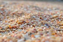 Muchas pequeñas cáscaras del mar en la orilla de mar Imagen de archivo libre de regalías