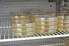 Muchas placas de Petri con medio de cultivo en laboratorio Imagen de archivo